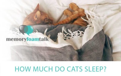 How Much Do Cats Sleep?