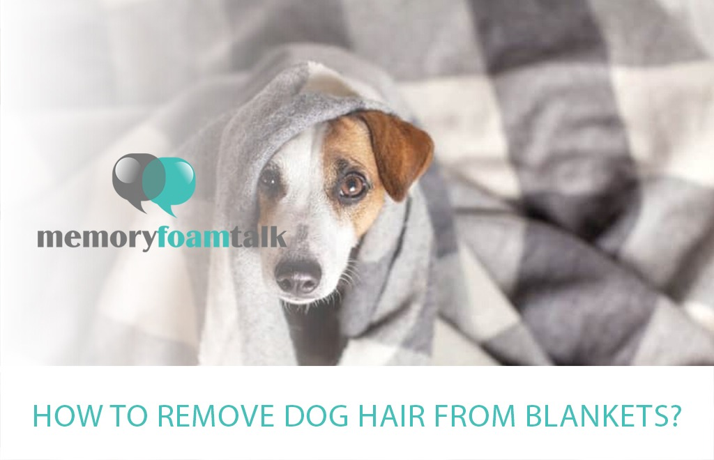 How To Remove Dog Hair from Blankets?